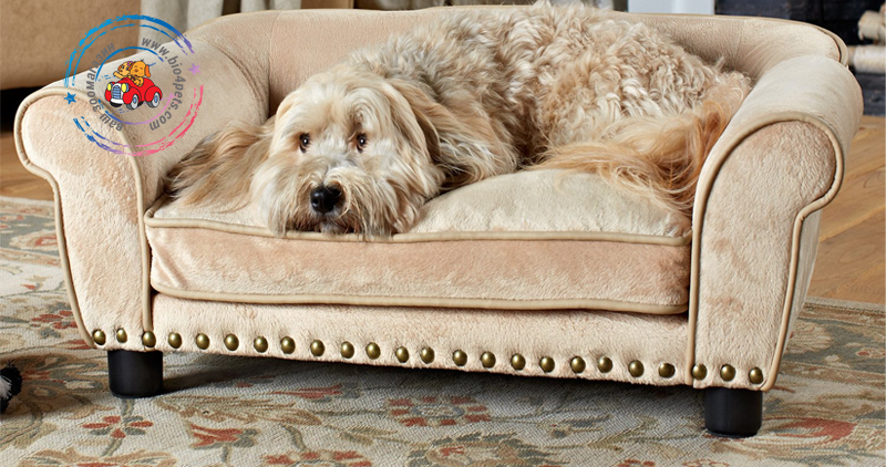 category-dogbed.png